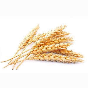 Pšenica má množstvo živín