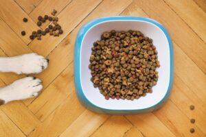 Výživa zvierat od kvalitného predajcu